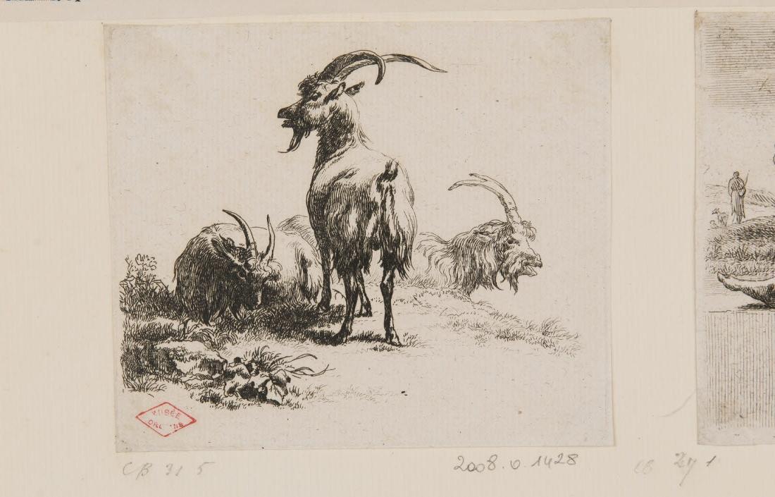 Un bouc et trois chèvres_0