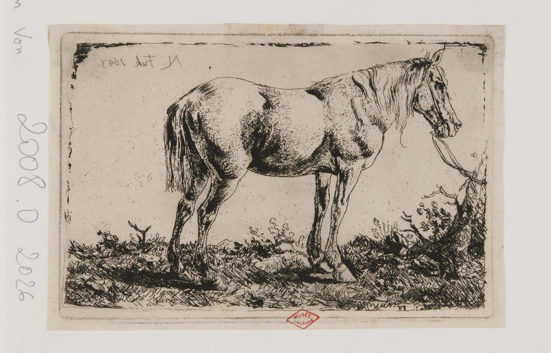 anonyme (inventeur, d'après, ?), BARTSCH Adam von (graveur) : Cheval attaché à un tronc
