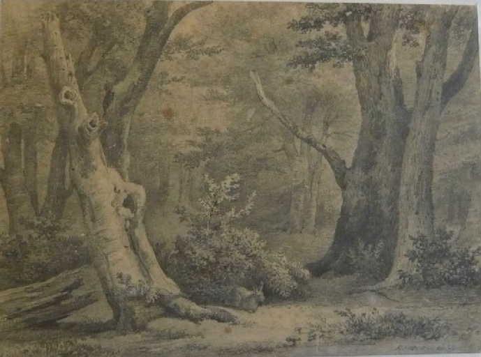 Intérieur de forêt
