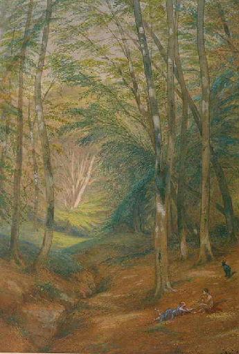 Sous-bois dans la forêt de Pierrefonds