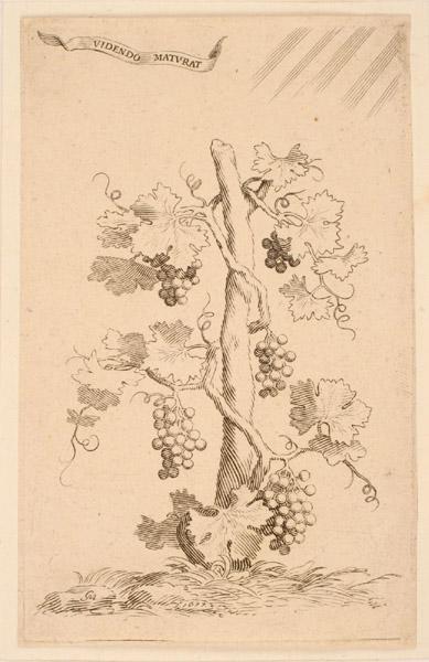 Ex-libris de Charles-Emmanuel Borjon ; Cep de vigne_0
