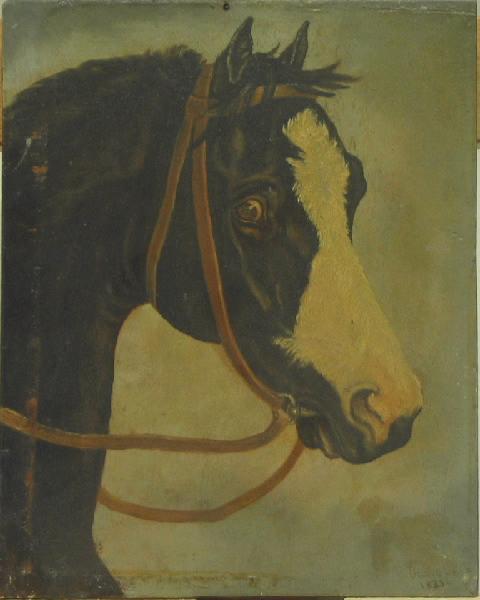 Tête de cheval_0