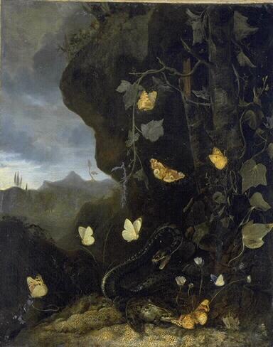 Serpents, crapauds et papillons (Titre de David Fiozzi) ; Serpent, grenouille et papillons