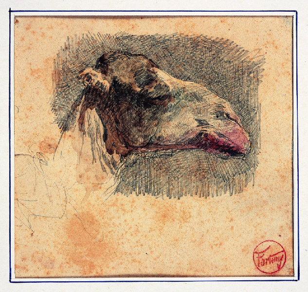 FORTUNY Y MARSAL Mariano : Tête de chameau