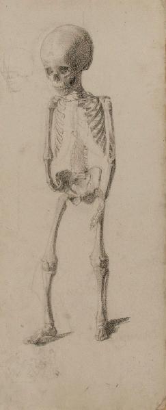 Squelette d'enfant (recto)_0