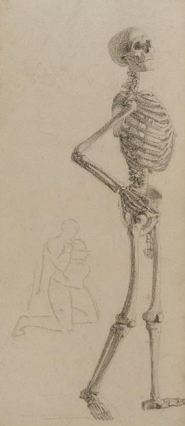 Squelette de profil (verso)_0