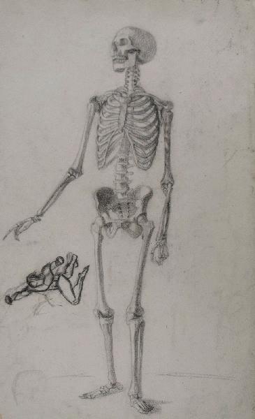 Squelette de face (recto)_0