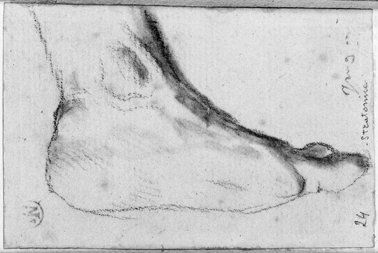 Seleucos (Son pied gauche)_0