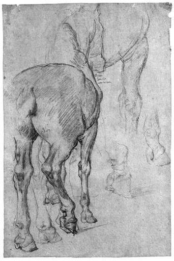 Arrière-train d'un cheval (Avec reprise des jambes)_0