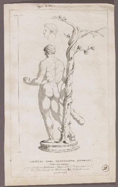 Hercules poma hesperidum auferens_0