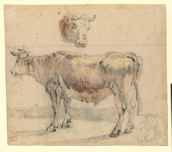 Une vache et une tête de vache_0