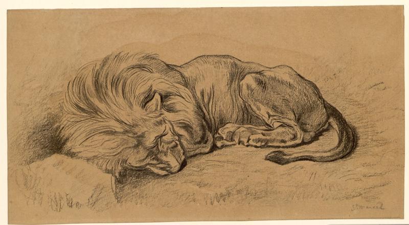 Lion couché_0