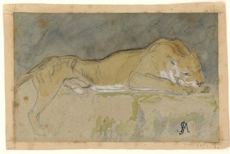 Lionne couchée_0