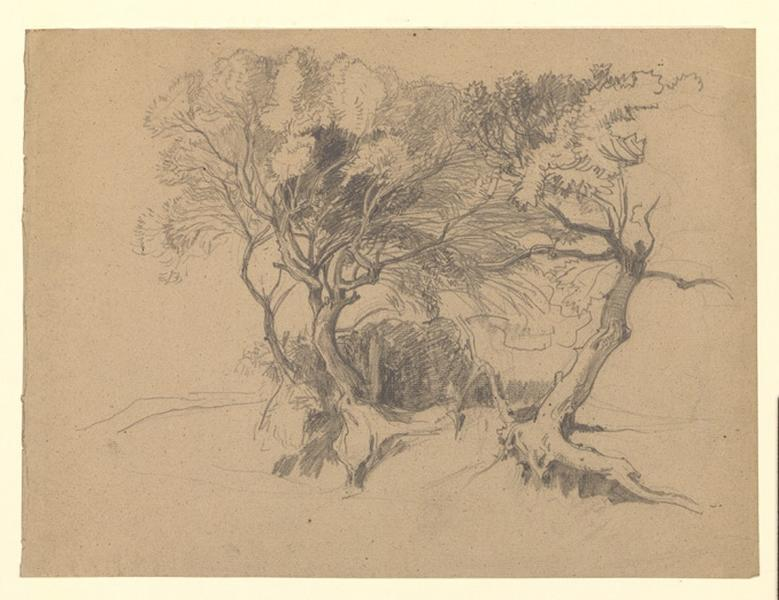 Etude d'arbres dénudés