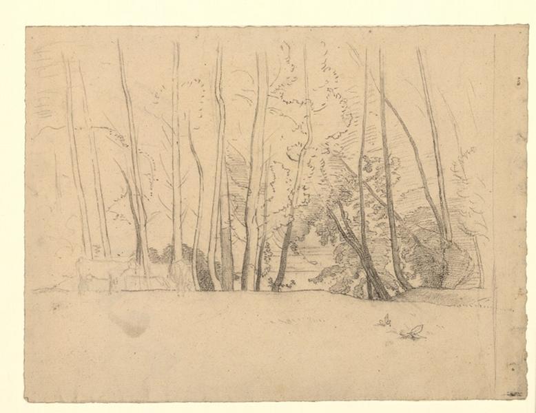 Rideau d'arbres nus dans un pli de terrain (Rideau d'arbres nus dans un pli de terrain, vaches esquissées)