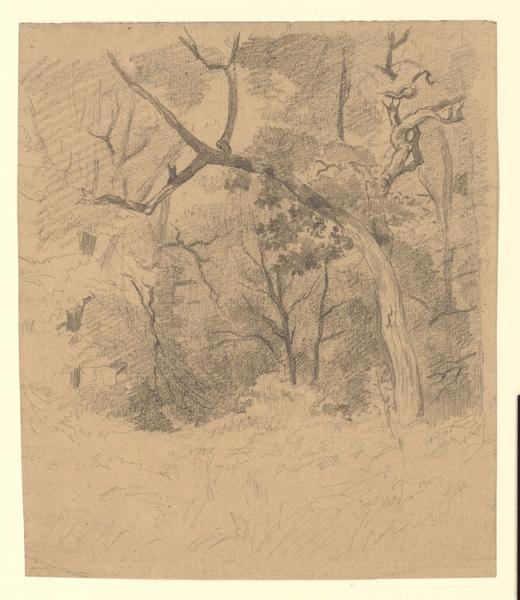 Recto : Sous bois ; Verso : Etude pour un arbre_0