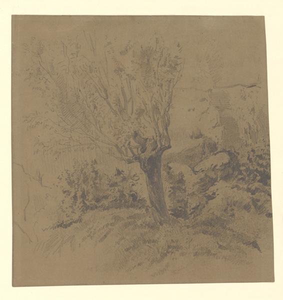 Un vieux saule parmi des rochers