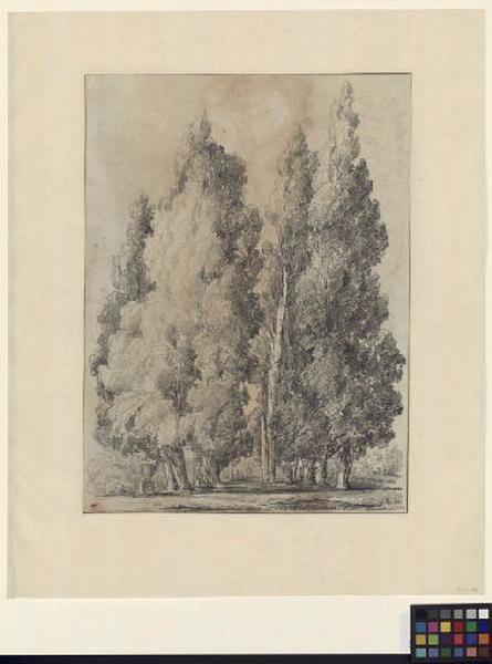 Les cyprès de la villa d'Este à Tivoli ; Paysage - Ruines d'Italie ; Allée avec de grands arbres_0