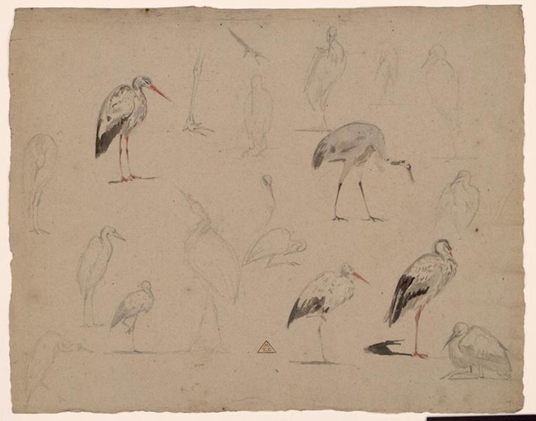 BRUNCLAIR Eugène (dessinateur, peintre) : Etude d'échassiers