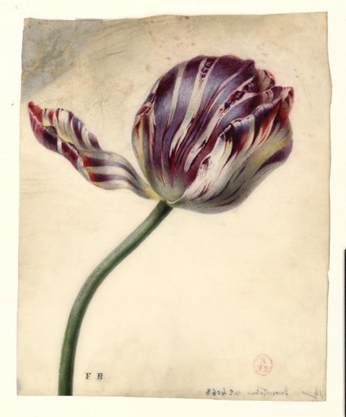 Tulipes aux pétales rayées_0