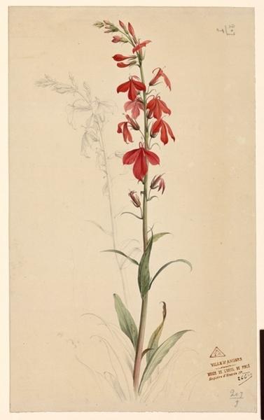 anonyme : Branches d'orchidées à fleurs rouges