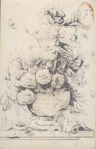 THOREL Cécile Marie (dessinateur) : Etude de fleurs