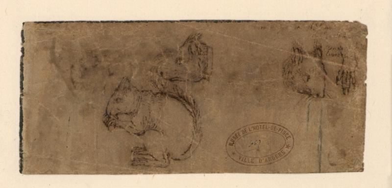 Etude d'écureuil (recto) ; Etude de trophée, tête de femme (verso)_0