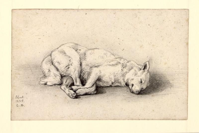 BODINIER Guillaume (dessinateur, peintre, dessinateur) : Etude de chien