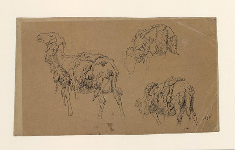 VERBOECKHOVEN Eugène (dit), VERBOECKHOVEN Eugen Joseph (dessinateur) : Etude de trois brebis