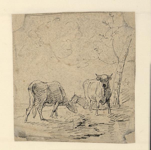 Deux vaches près d'un arbre_0
