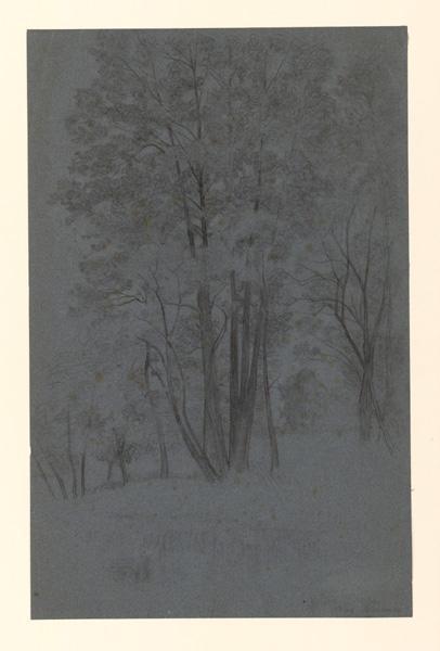 LAURENS Auguste (dessinateur) : Etude de jeunes arbres en forêt