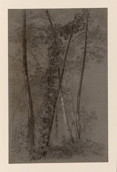LAURENS Auguste (dessinateur) : Etude d'un bouquet d'arbres