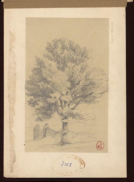 Un arbre et une barrière