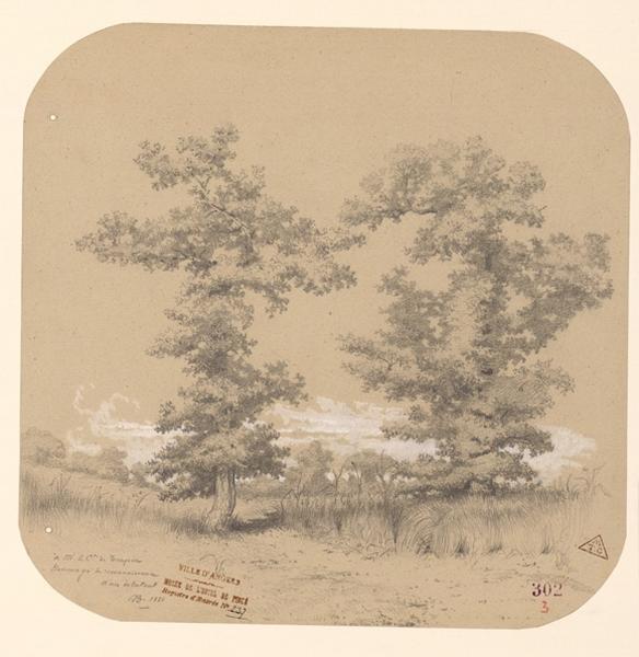 anonyme, A B : Deux grands arbres