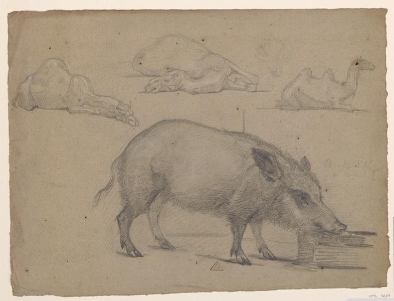 Un porc et trois chameaux couchés_0