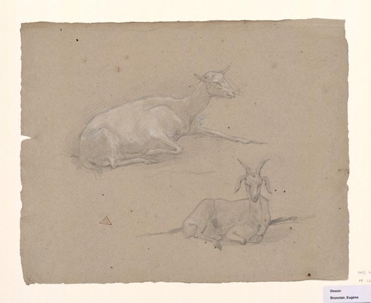 BRUNCLAIR Eugène (dessinateur) : Deux chèvres