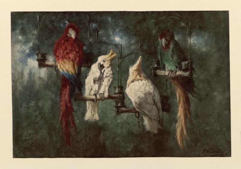 Un ara bleu et rouge avec deux cacatoès blancs et un perroquet à longue queue_0