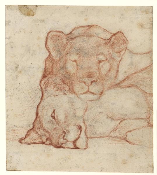 Deux lions couchés_0