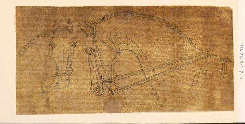 Deux études de têtes de chevaux