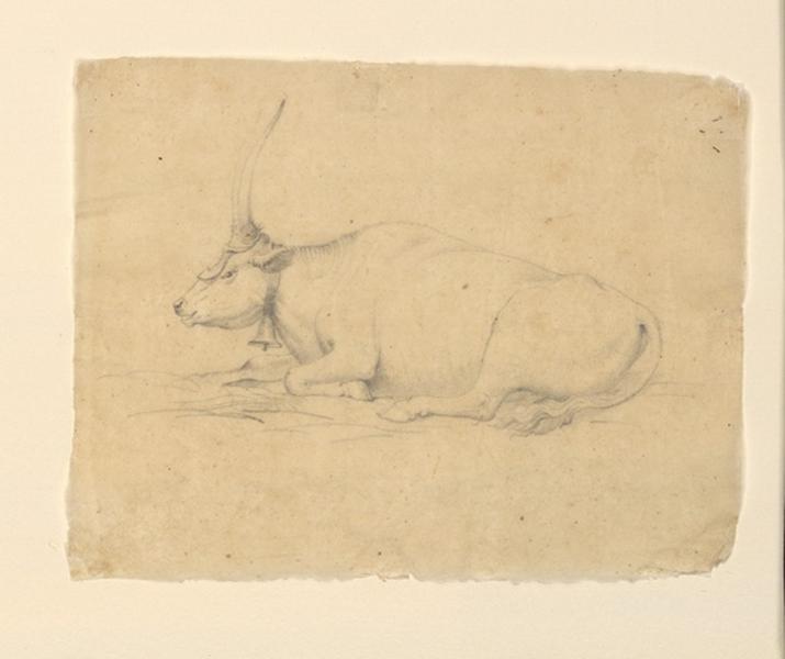 TURPIN DE CRISSE Lancelot Théodore Comte de : Etude de buffle