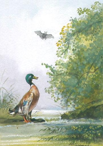 La Chauve-Souris, le Buisson et le Canard, XII, 7_0