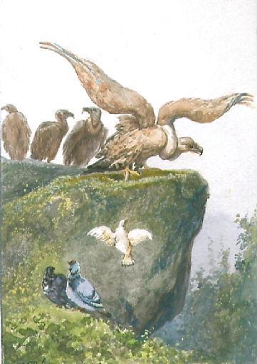 Les Vautours et les Pigeons, VII, 7