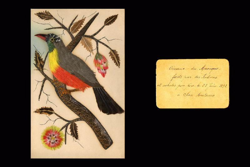 Oiseaux du Mexique_0