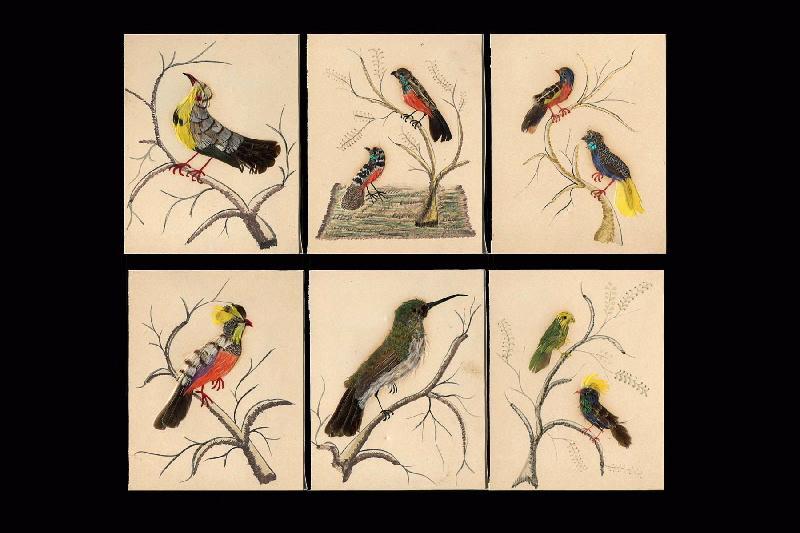 Oiseaux du Mexique