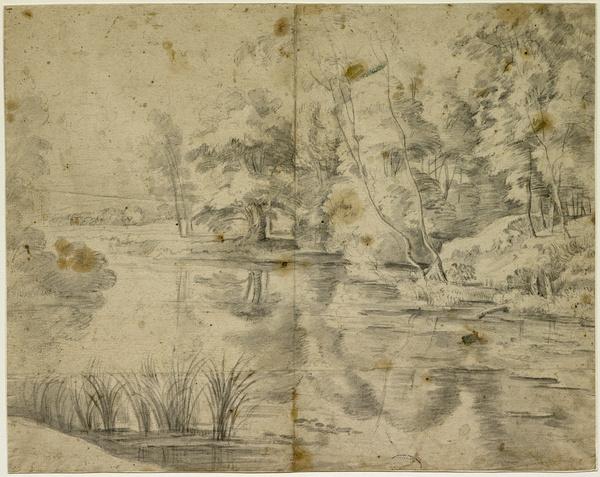 Arbres au bord d'une rivière_0