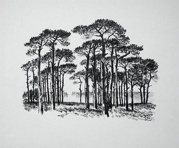 Les pins [titre attribué]_0