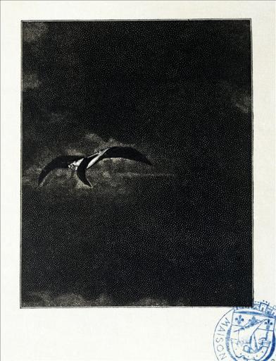 Album de gravures d'après les dessins de Victor Hugo pour les Travailleurs de la mer : Tempête, le cormoran (planche 43) - 1882_0
