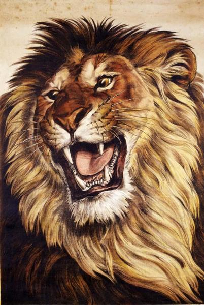 Lion (titre factice)