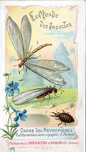 Le monde des insectes (titre inscrit)_0
