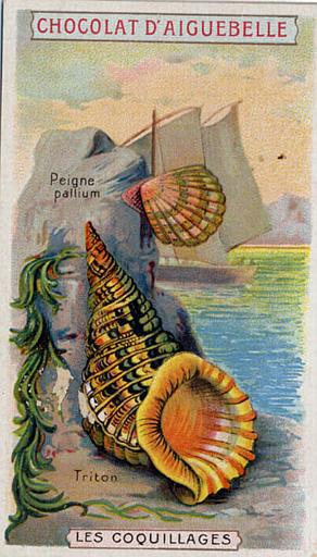 LES COQUILLAGES / Peigne / pallium / Triton (titre inscrit)_0